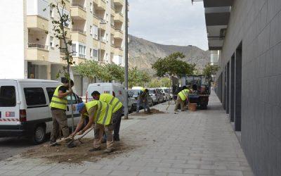 Mantenimiento comienza la repoblación de árboles de la ciudad