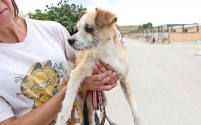 Policía Local y Bomberos rescatan a un perro atrapado en un pozo