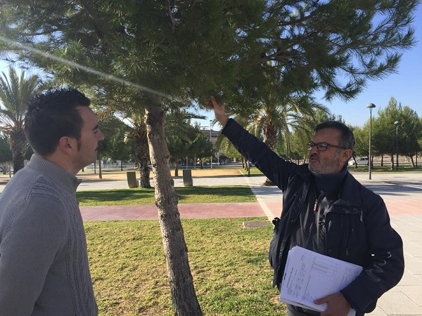 Mantenimiento comienza la campaña preventiva contra la procesionaria