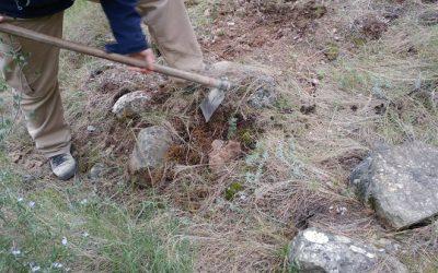 80 carrascas para la vegetación autóctona de la umbría de Camara