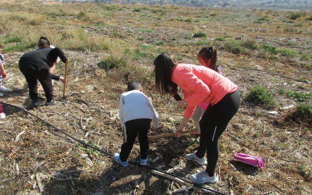 Cerca de 500 alumnos de Elda ayudan a reforestar la antigua escombrera de Bolón