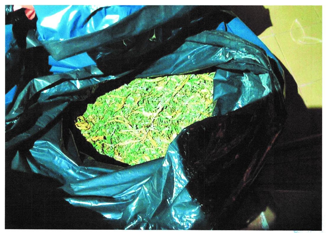 La Policía Local desmantela un gran secadero de marihuana en un chalé del barrio Ciudad Vergel