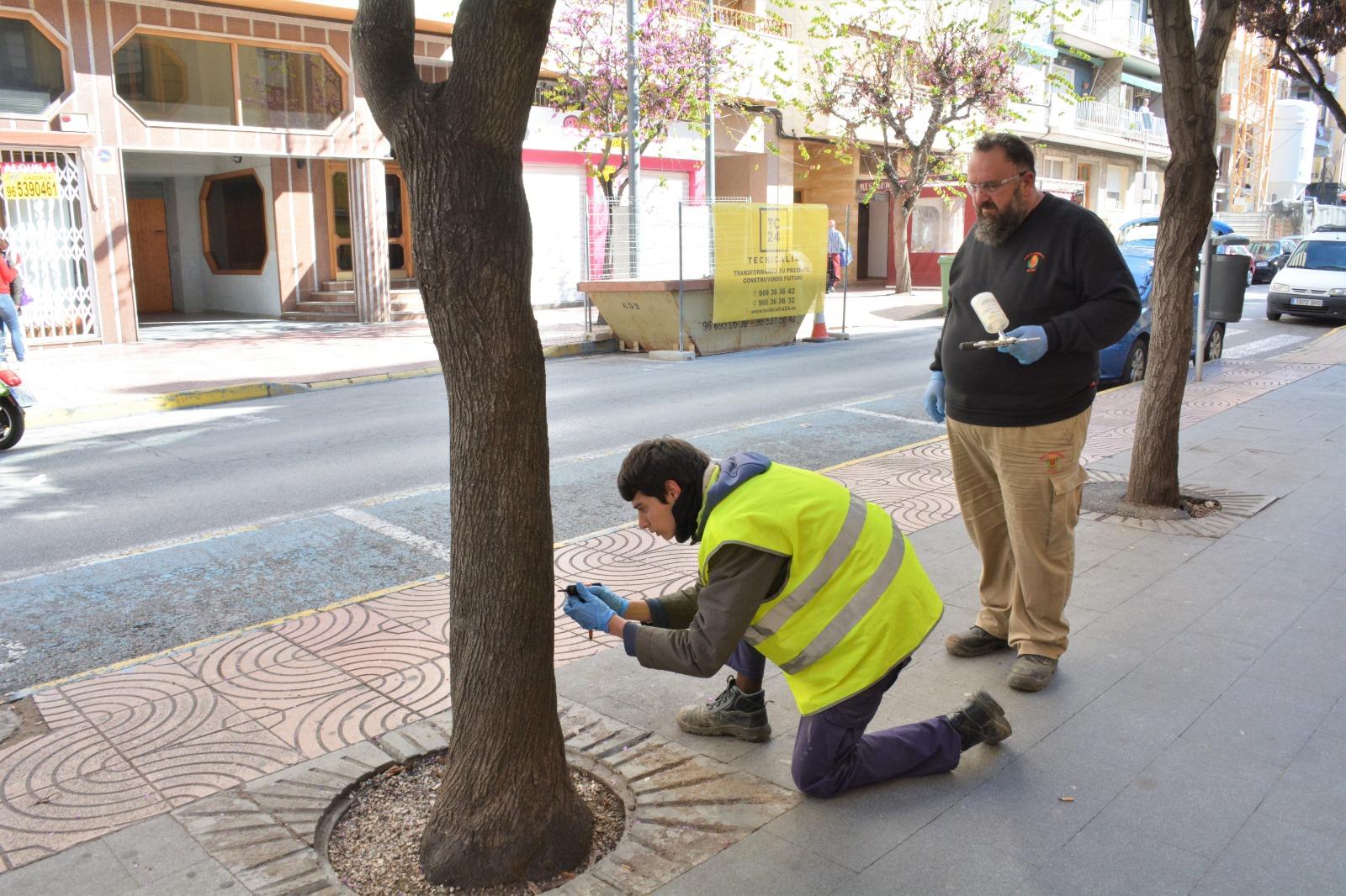 El Ayuntamiento de Elda inicia un nuevo tratamiento biológico para combatir la plaga que afecta al árbol del amor