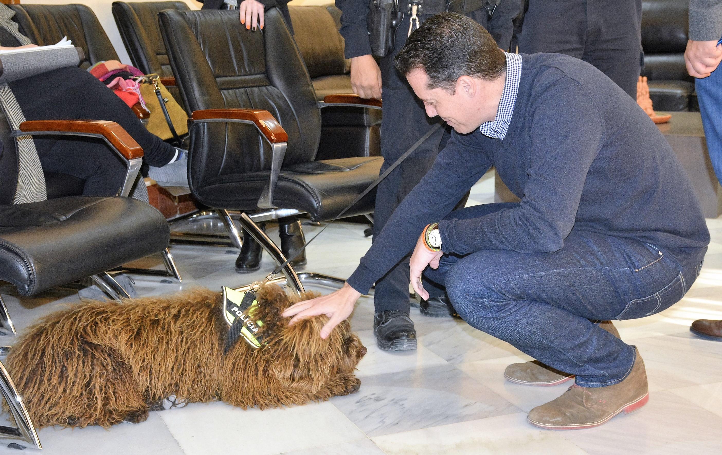 Distinción para el Ayuntamiento por la retirada del perro Suso de la Unidad Canina tras el fallecimiento de su agente guía