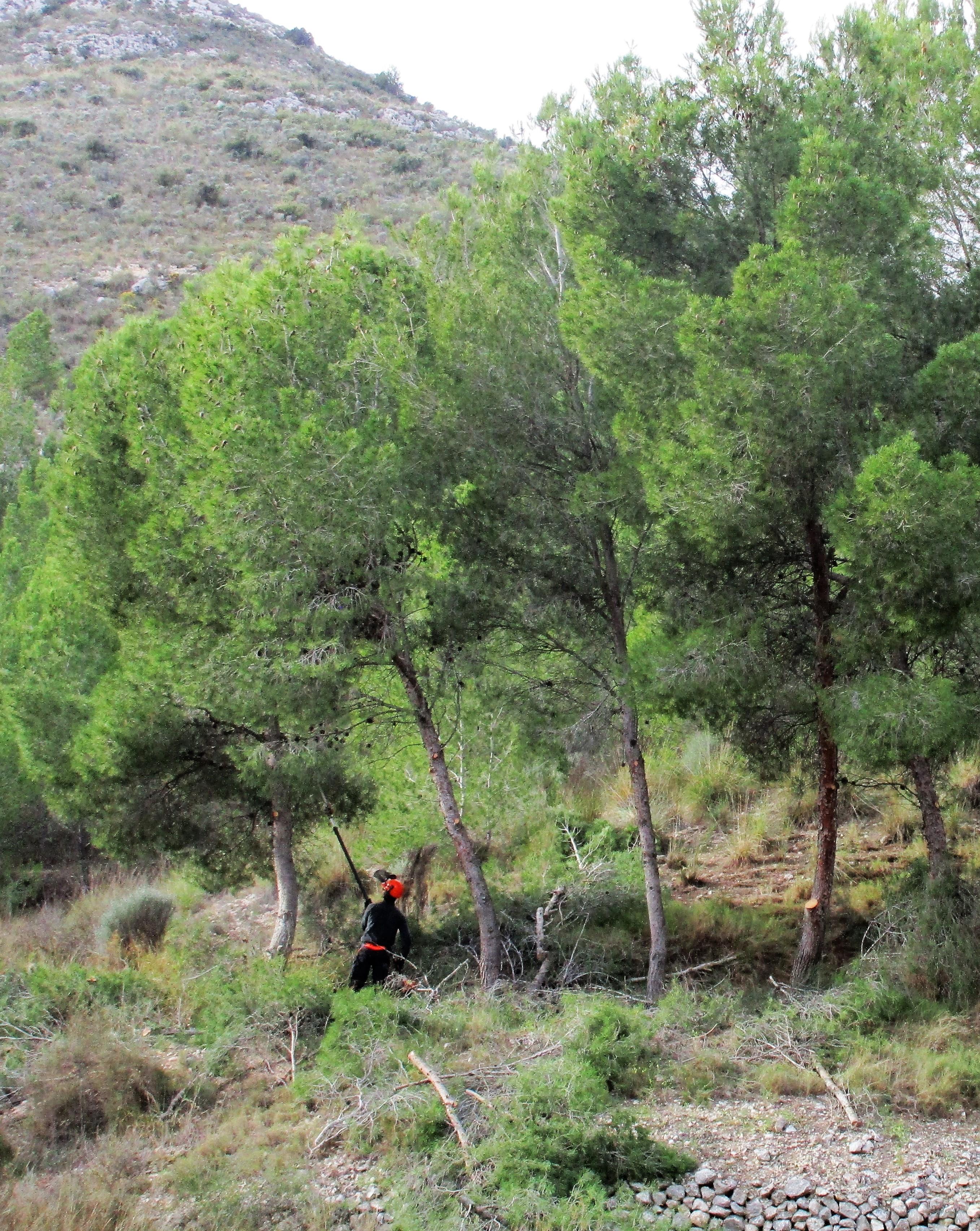El Ayuntamiento de Elda desbroza y poda el entorno del Pantano para reducir el riesgo de incendios forestales