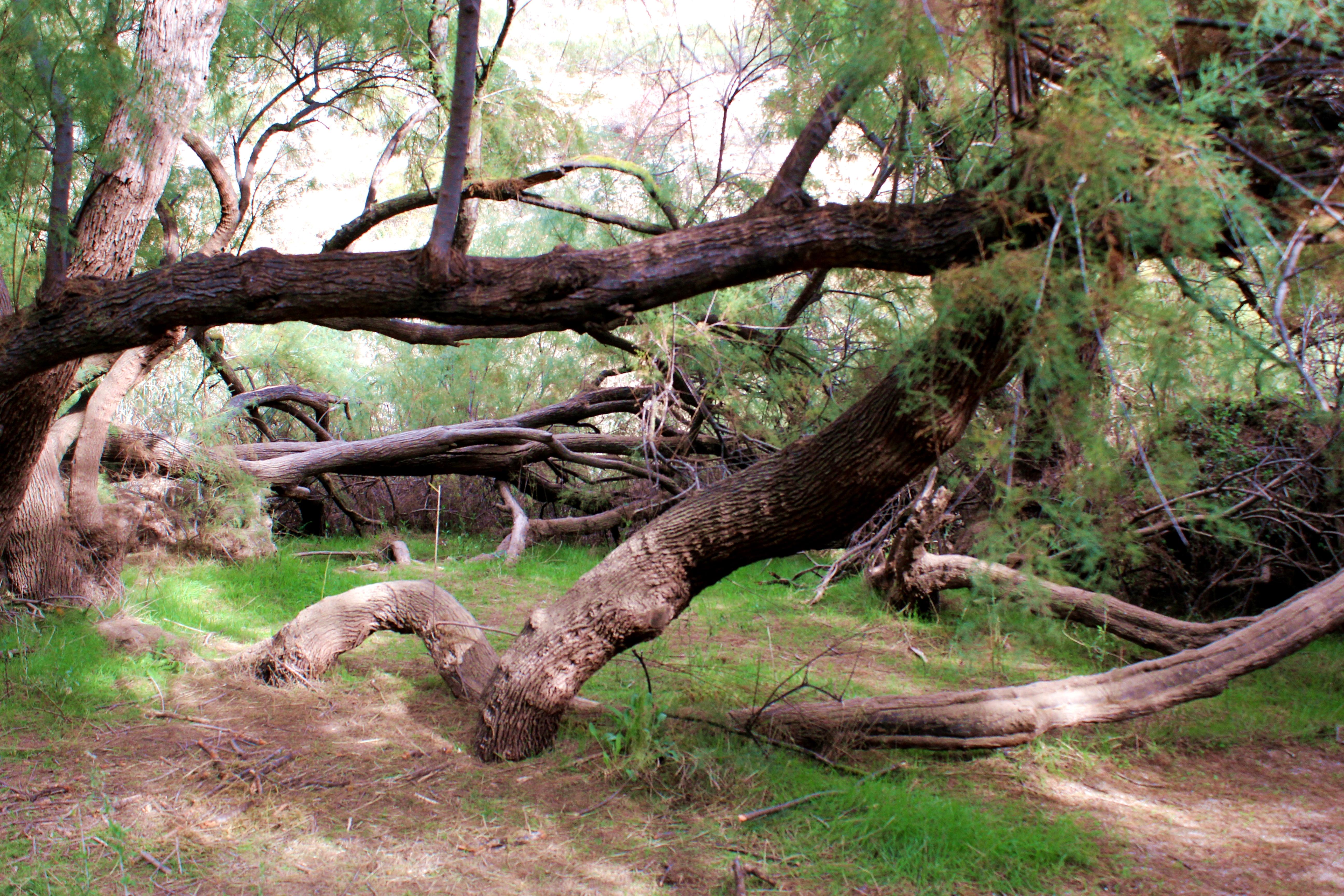 Los Ayuntamientos de Elda y de Petrer inician un estudio para la declaración del Pantano de Elda como Paraje Natural Municipal