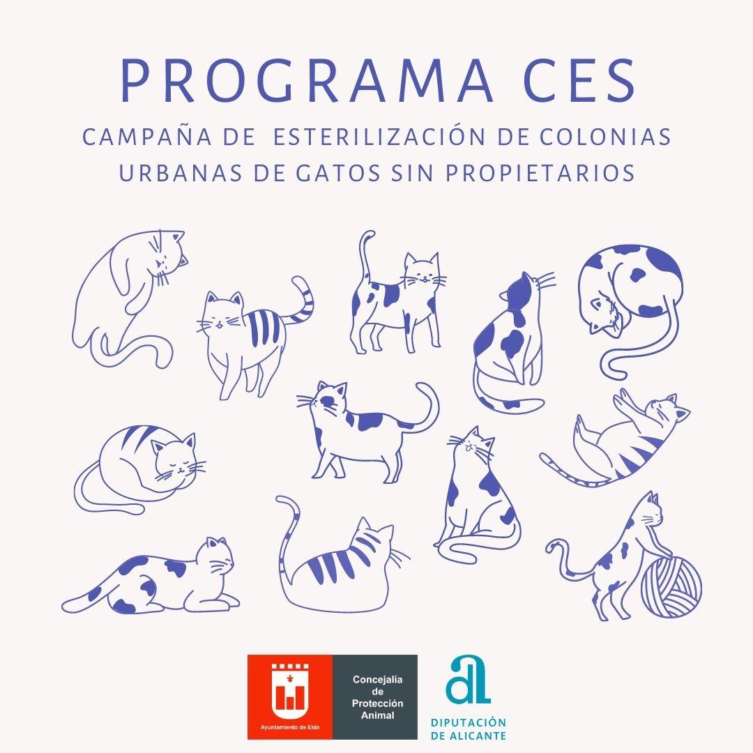 El Ayuntamiento de Elda esteriliza 187 gatos callejeros mediante el método CES